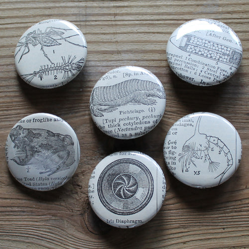 6 pinback buttons: Toad, Mosquito, Bullet, and other antique images - RadCakes Shirt Printing