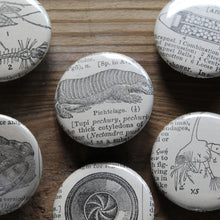 A collection of pinback buttons with antique dictionary illustrations