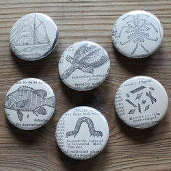 pin back buttons of antique illustrations of a turtle, inch worm, fish, and ship