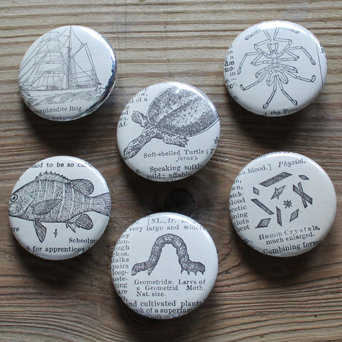 6 pinback buttons: Soft Shelled Turtle, Sea Ship, Fish, and other antique images - RadCakes Shirt Printing