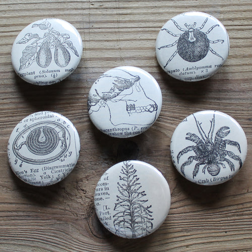 6 pinback buttons: Skull, Crab, Tick, Hen Egg, and other antique images - RadCakes Shirt Printing