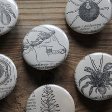 Ape skull pinback buttons, along with other scientific illustrations from 1920