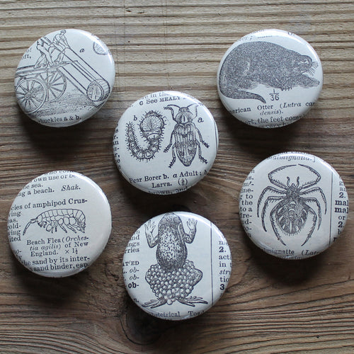 6 pinback buttons: Otter, Frog, Spider, Beach Flea, and other antique images - RadCakes Shirt Printing
