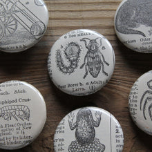 Interesting and unique pinback buttons with antique animal illustrations