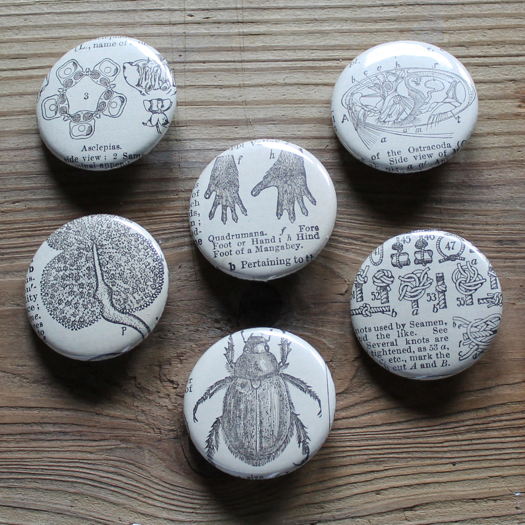 6 pinback buttons: Knot Chart, Beetle, Monkey Hands, and other antique images - RadCakes Shirt Printing