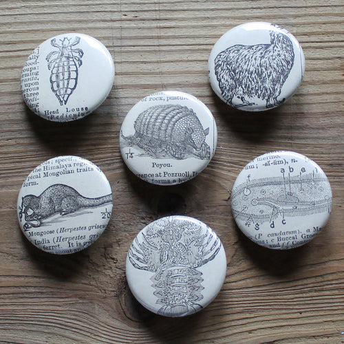 6 pinback buttons: Mongoose, Alpaca, Poyou, Head Louse, and other antique images - RadCakes Shirt Printing