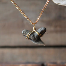 extinct tiger shark tooth necklace maryland virginia new jersey