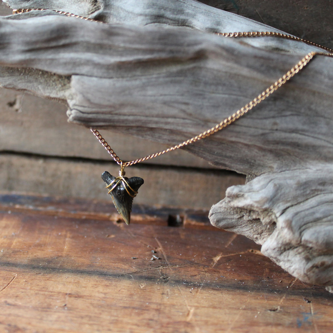 Fossil shark tooth wire wrapped jewelry by Lauren Dalrymple Wade