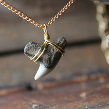 Fossil shark tooth jewelry store in Monmouth County NJ