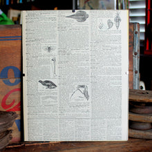 "Antique 1920 Encyclopedia ""Pterodactyl"" page in borderless picture frame - RadCakes Shirt Printing"