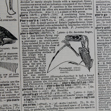 "Antique 1920 Encyclopedia ""Pterodactyl"" page in borderless picture frame"