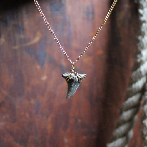 Fossil Snaggletooth Shark Tooth choker necklace 003 - RadCakes Shirt Printing