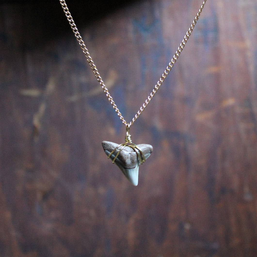 Fossil Tiger Shark Tooth choker necklace 005