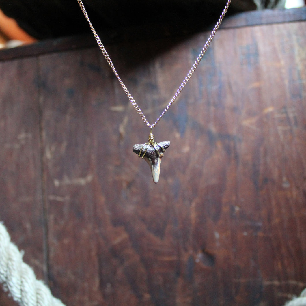 Authentic shark tooth necklace handmade by Lauren Wade