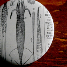 "Parts of a Squid 2.25"" pinback button - RadCakes Shirt Printing"
