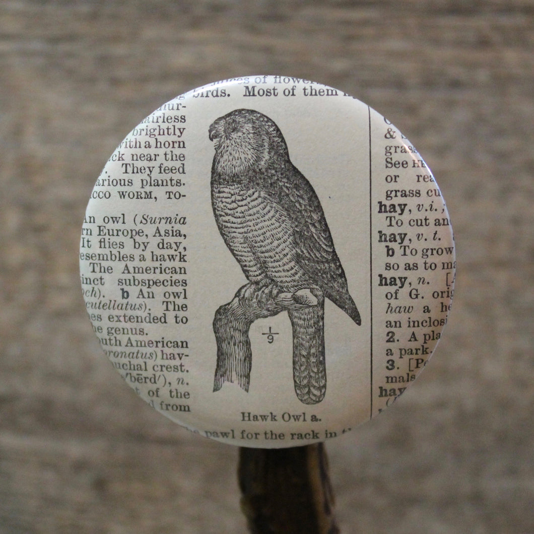Hawk Owl engraving design for sale pinback button collection