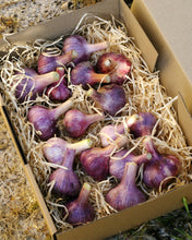 1kg box of Garlic *Sold Out*