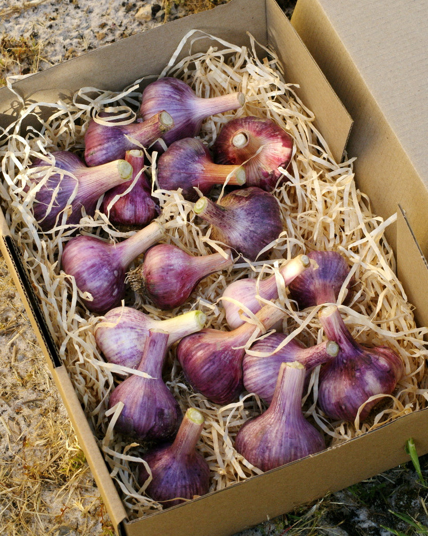 1kg box of Garlic - Late Season Varieties