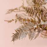 Brown Fern Foliage