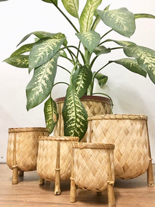 Veronica Bamboo planters set of 5