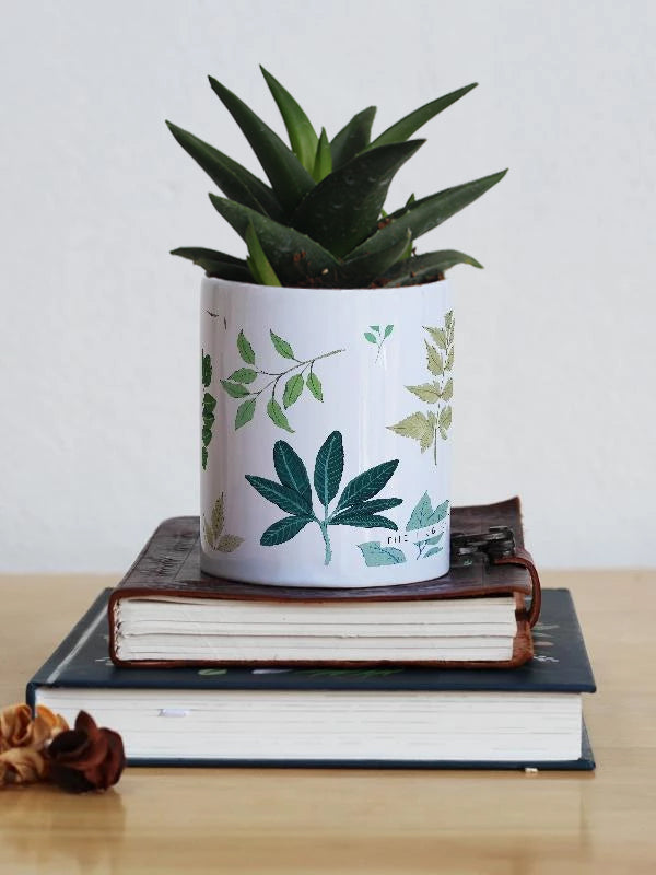 Live Plant with Planter | Leaves - TheInkBucketstore