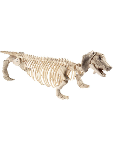 Natural Dachshund Dog Skeleton Prop