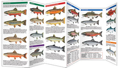 Trout & Salmon Guide
