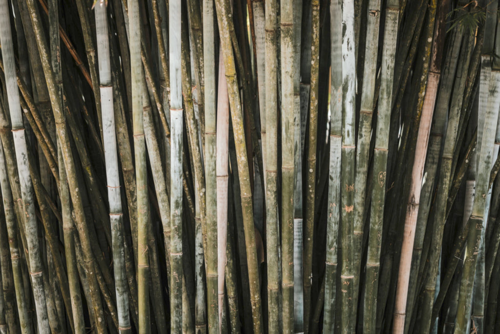 Ingredient Highlight: Bamboo Charcoal
