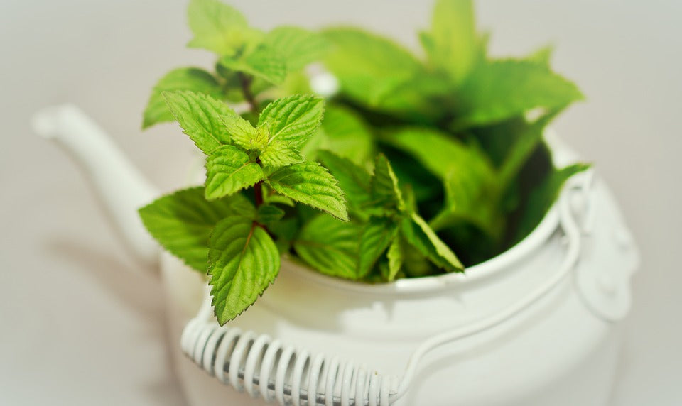 Peppermint for Blood Flow