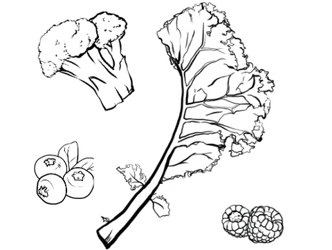 A black-line sketch of various fruits and vegetables on a white background.