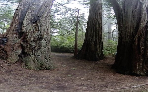 Free Virtual Reality Video: Sequoia National Park VR 360 Stereoscopic