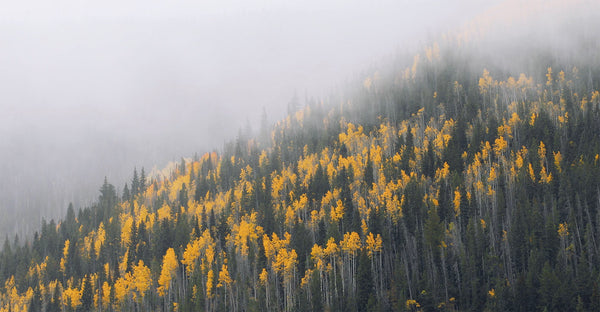 Free 4K Nature Video: Foggy autumn fall foliage