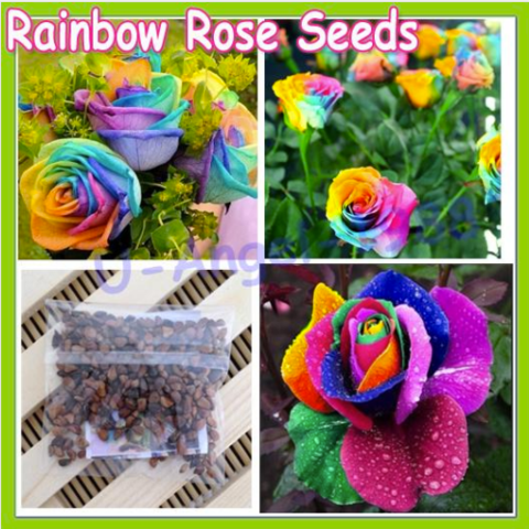150 pcs Seeds Rare Holland Rainbow Rose Flower Home Garden Rare Flower Seeds Colorful Rose Seeds - All-unique-things