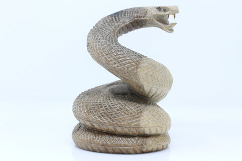 Coiled Wood Snake