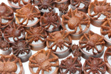 Spider Wooden Plugs - (Pair) - PA106