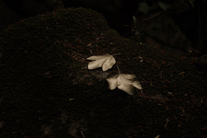 A Glow In a Forest of Night Shades