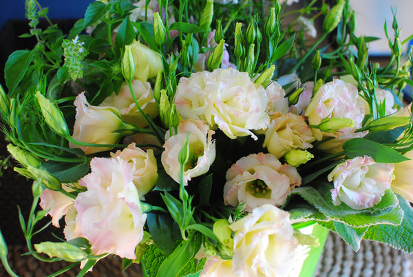 Lisianthus Magic