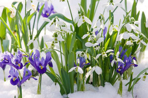 A Few Winter Gardening Tips