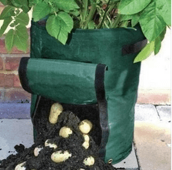 Growing Potatoes In A Bag.