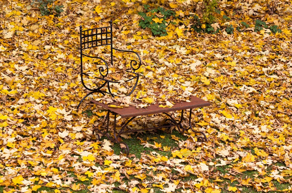 Autumn Chores To Make Your Garden And Lawn Lush Next Year