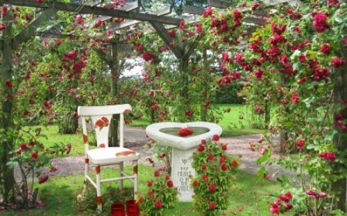 A Rose Garden? Why Have One!