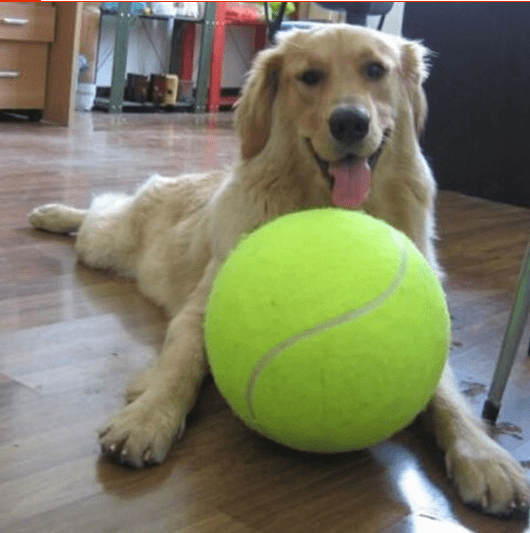 Monstrous 24cm Large Dogs Play Ball Inflatable Tennis Ball Thrower Ball Training - Garden Oasis