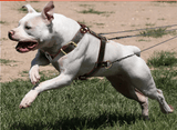 dog-training-harness