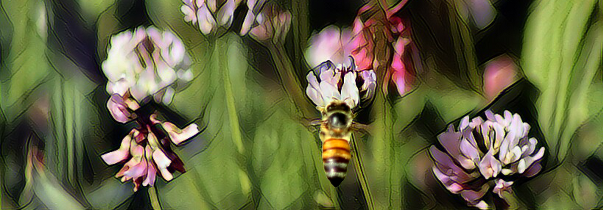 10 Things You Didn't Know About Bees