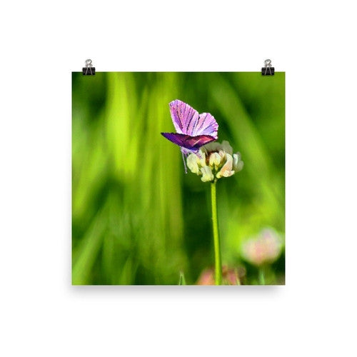 Butterfly on a Flower Poster - JenC Designs