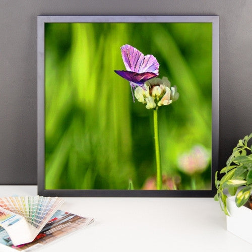 Butterfly on a Flower Framed poster - JenC Designs