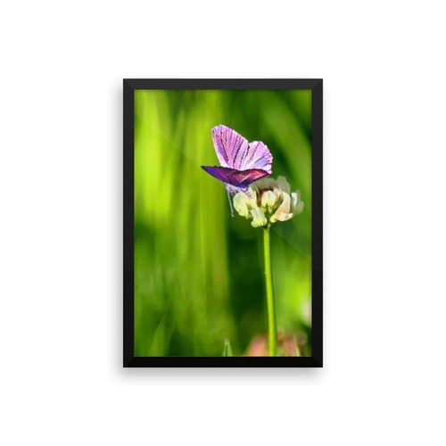 Butterfly on a Flower Framed poster