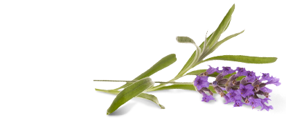 Aroma Lavender Face Wash image