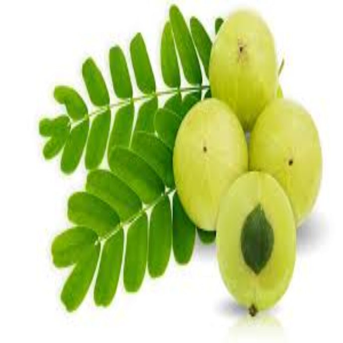 Buy Amla Powder Online in India - The Art Connect