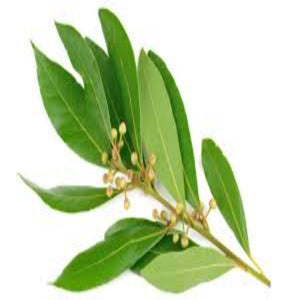 Buy Bay Leaf Essential Oil Online in India - The Art Connect